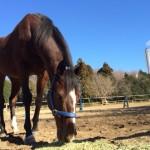 乗馬クラブの初心者速歩レッスン 茨城県鹿島市 Mさん