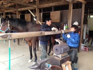 乗馬クラブで装蹄の見学をしました。 茨城県龍ヶ崎市 Kさん