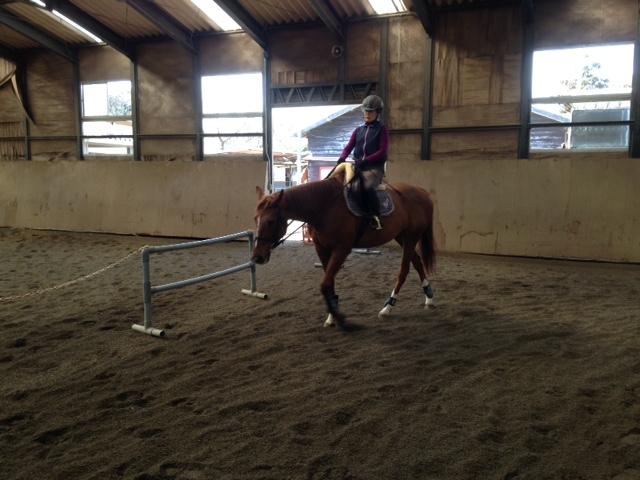 乗馬クラブのビギナーレッスンで正反動を練習しました! 茨城県龍ヶ崎市 Sさん