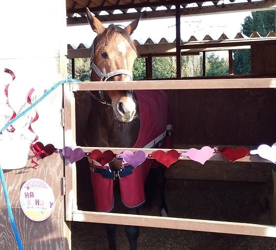 乗馬クラブの馬のBirthday Ⅱ 稲敷市 S様