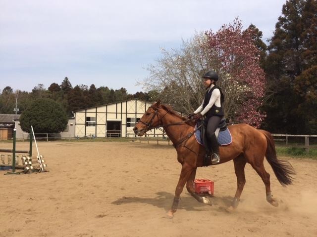 乗馬クラブのノービスレッスン 茨城県阿見町 H様