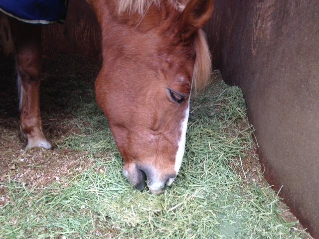 乗馬クラブで馬達の昼食 茨城県稲敷市 Kさん