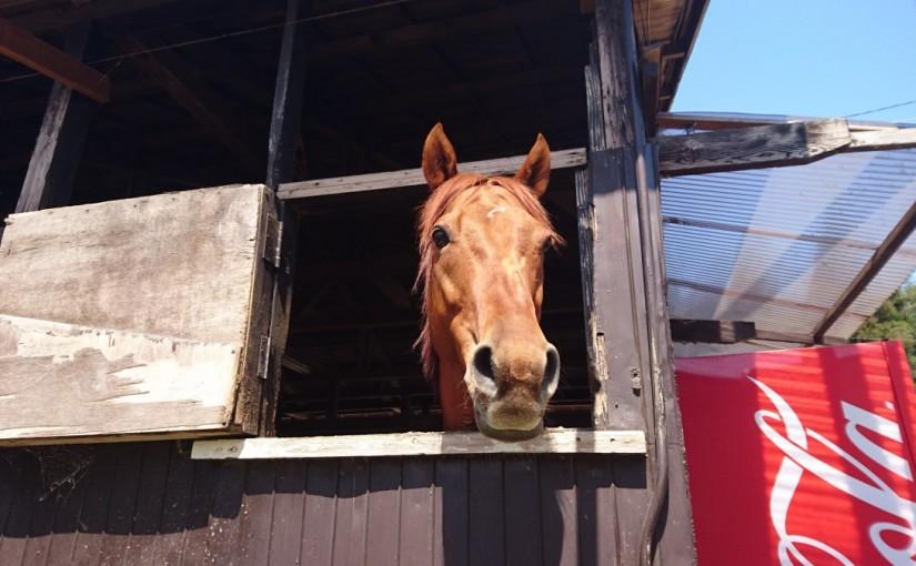 乗馬クラブで初心者レッスンを受講してきました。茨城県龍ヶ崎市在住Tさん