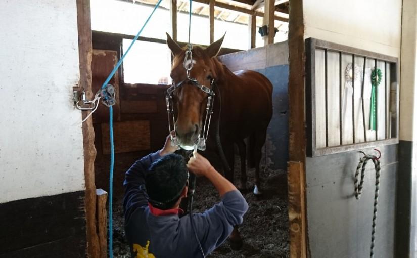 乗馬クラブに馬の歯医者さんが来ました(茨城県/エルミオーレ茨城)