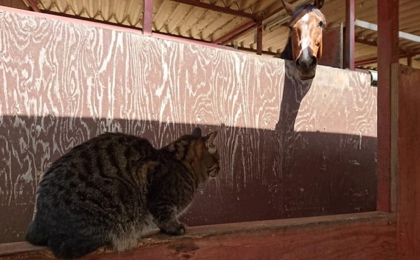 乗馬クラブで体験乗馬をしました(茨城県坂東市/I様)