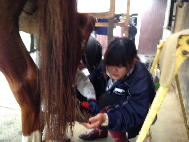 乗馬クラブでビギナーレッスンを行いました(千葉県流山市/Hくん)