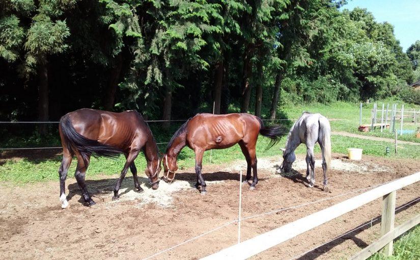乗馬クラブでのんびりと過ごす馬たち 茨城県つくばしTさん