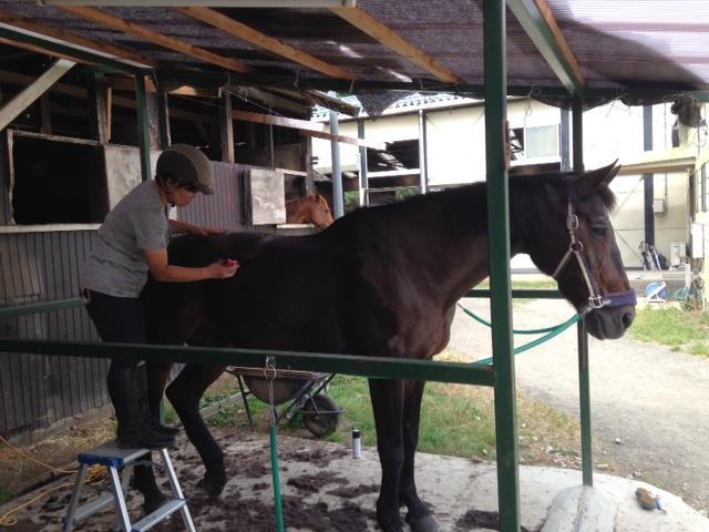 乗馬クラブの新しい仲間 茨城県稲敷市ヴァベちゃん
