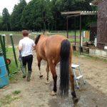 乗馬クラブで愛馬を丸洗いしました! 茨城県石岡市 Sさん