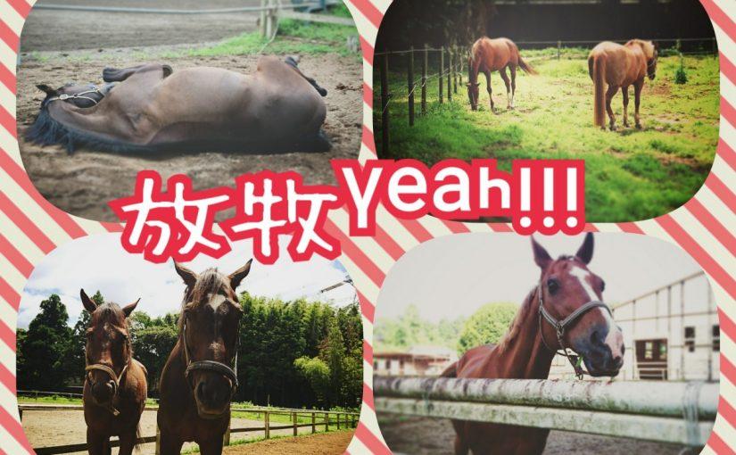 乗馬クラブで放牧の観察をしました(茨城県稲敷市/エルミオーレ茨城)
