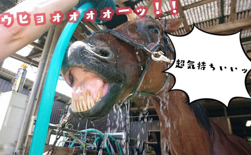 乗馬クラブで丸洗いをしました(千葉県流山市/U様)
