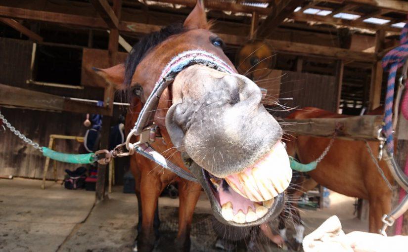 乗馬クラブでビギナーレッスンをしました(茨城県牛久市/K様)