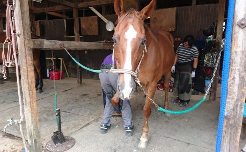 乗馬クラブで装蹄の見学をしました(茨城県稲敷市/エルミオーレ茨城)