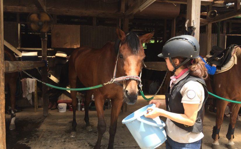 乗馬クラブでレッスンを受講しました。ラサラス君、お疲れ様! 茨城県龍ヶ崎市 Uさん
