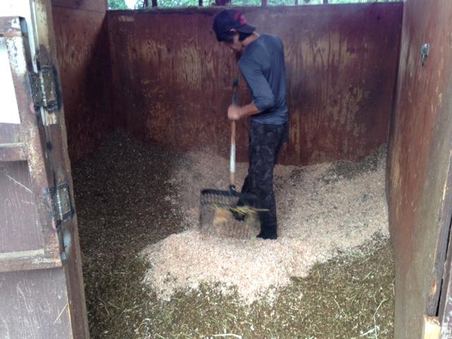 乗馬クラブで馬房掃除を体験しました。 茨城県稲敷市 Kさん