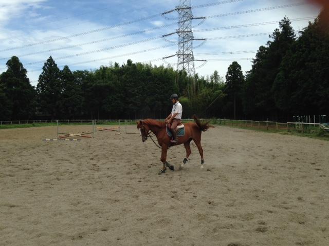 乗馬クラブでスタッフの方の騎乗を見学しました。 茨城県龍ヶ崎市 Uさん