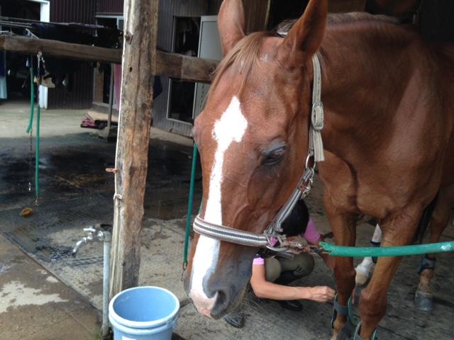 乗馬クラブでレッスン前に写真を撮りました。 茨城県水戸市 Aさん