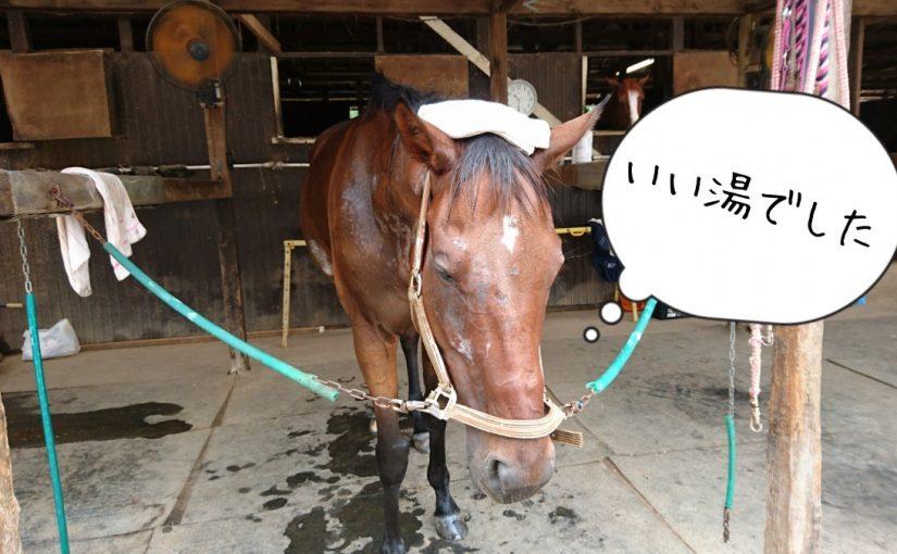 乗馬クラブでビギナーレッスンをしました(茨城県守谷市/S様)