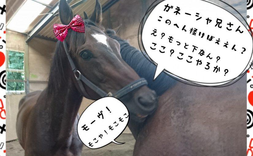 乗馬クラブでビギナーレッスンをしました(東京都足立区/I様)