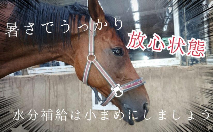 乗馬クラブでビギナーレッスンをしました(埼玉県さいたま市/G様)