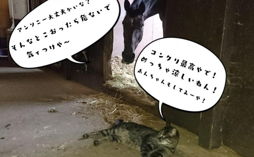 乗馬クラブでビギナーレッスンをしました(千葉県柏市/O様)