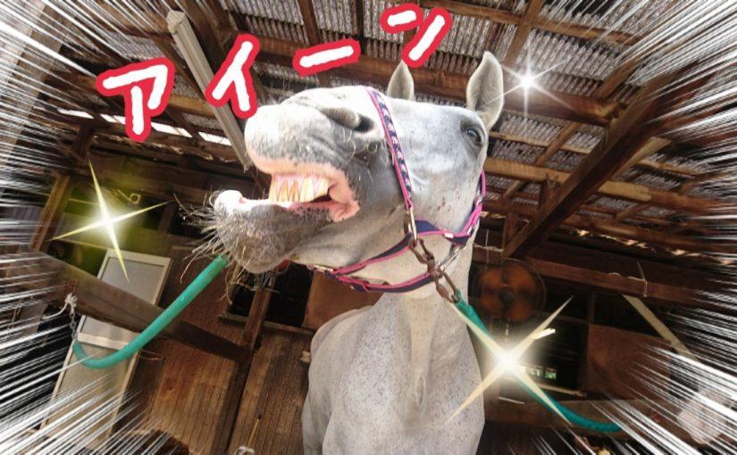 乗馬クラブでビギナーレッスンをしました(茨城県水戸市/M様)