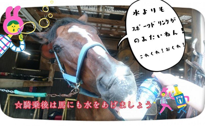 乗馬クラブでビギナーレッスンをしました(茨城県土浦市/H様)