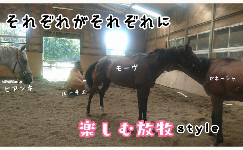 乗馬クラブでビギナーレッスンをしました(千葉県柏市/E様)