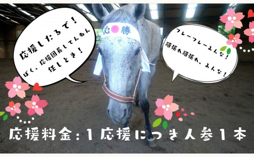 乗馬クラブで丸洗い講習をしました(茨城県稲敷市/エルミオーレ茨城)
