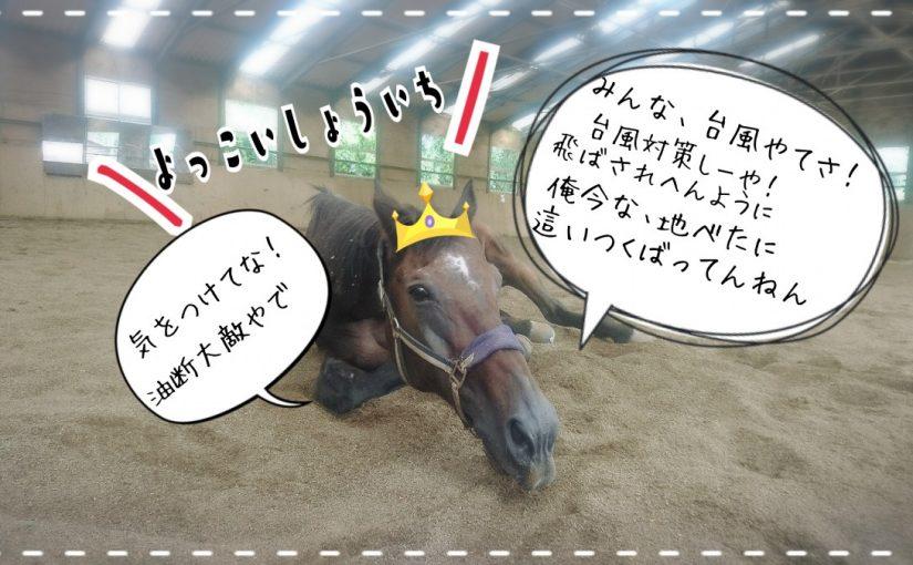 乗馬クラブでビギナーレッスンをしました(茨城県鹿嶋市/N様)