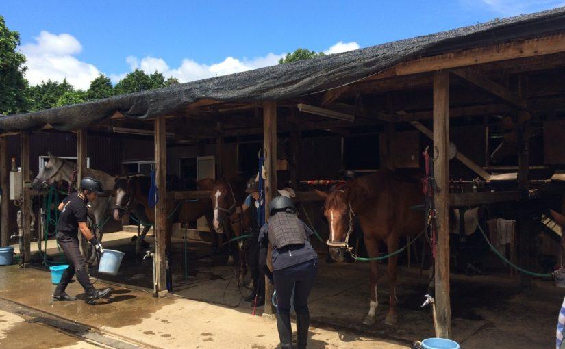 乗馬クラブで今日も暑かった・・・。 茨城県つくば市 Uさん