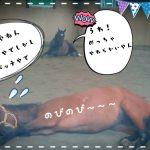 乗馬クラブでビギナーレッスンをしました(茨城県取手市/S様)