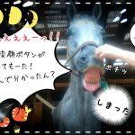乗馬クラブでビアンキの面白ボタンを見つけました(茨城県稲敷市/エルミオーレ茨城)