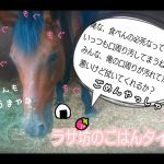 乗馬クラブで飼いつけをしました(茨城県稲敷市/エルミオーレ茨城)