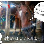 乗馬クラブでビギナーレッスンをしました(千葉県成田市/S様)