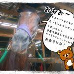 乗馬クラブでツボを発見!(茨城県稲敷市/エルミオーレ茨城)