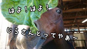 16-11-03-18-41-04-190_deco