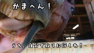 16-11-03-18-41-59-313_deco