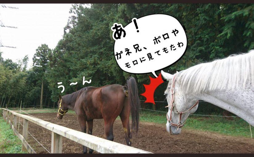 馬は心で乗るんです