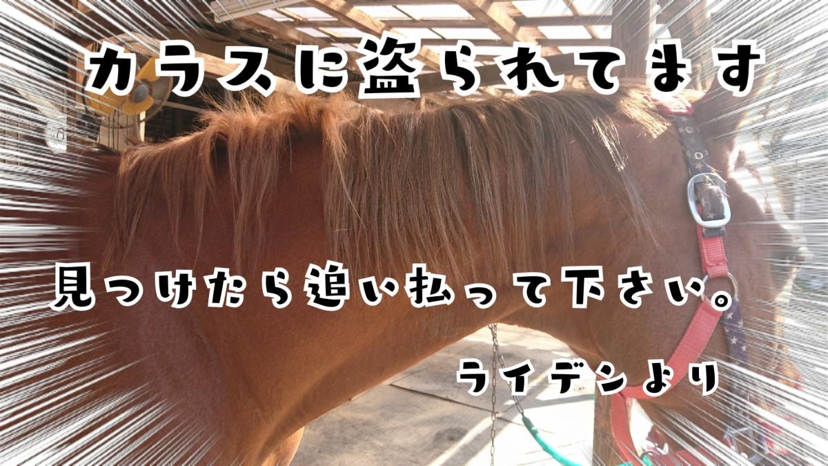 17-05-05-20-07-13-515_deco