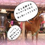 陽気な乗馬クラブ