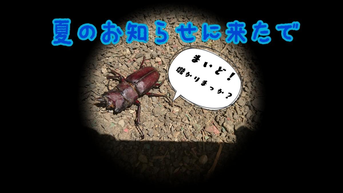 17-07-15-18-46-10-898_deco