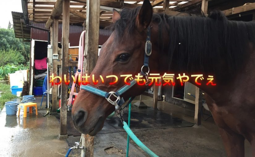 台風突撃💨