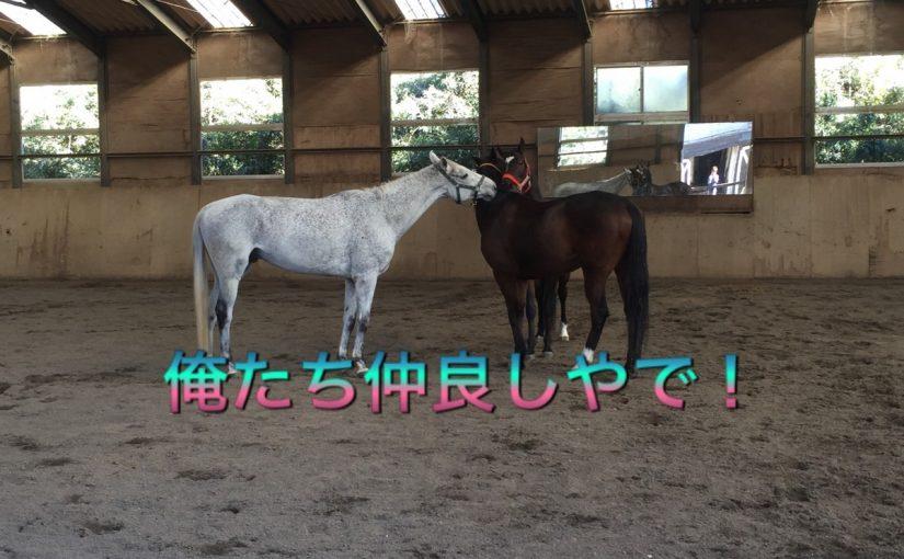 東関東馬術大会☆