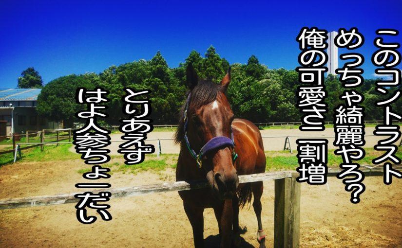 夏だ!乗馬だっ!!