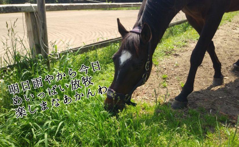 定休日の古井厩舎