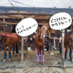 千葉県馬術大会